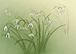 Julian Williams: Snowdrops