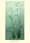 Julian Williams: White Egret Orchids