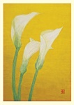 Yuko Hirose: Calla Lilies