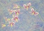 Yuko Hirose: Orchids