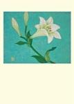 Yuko Hirose: White Lily