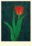 Yuko Hirose: Red Tulip