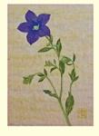 Yuko Hirose: Japanese Bell Flower