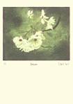 David Suff: Blossom