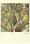 David Suff: Apples