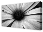 Canvas Art: Flower Petals