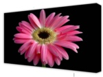 Canvas Art: Pink Daisy