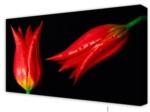 Canvas Art: Twin Tulips