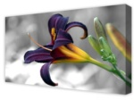 Canvas Art: Puple Iris In Winter