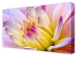 Canvas Art: Water Lily Surprise