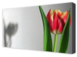 Canvas Art: Shadow Of A Tulip